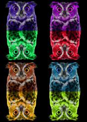 owl pop art owls birds animals cute colors home gifts decor