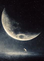 moon halfmoon stars worlf night dark surreal dreamy