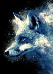 fox animal grunge texture art design nature cool unique digital illustration pop painting colors urban