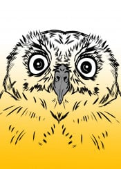 owl bird baby nature eyes illustration yellow design graphic graphicdesign cute