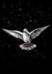 messenger bird legend pigeon dark piece