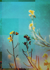 abstract landscape nature flowers digitalart