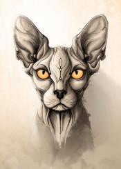 cat cats sphynx animal animals wild nature illustration