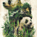 Another in my surreal nature series of animals in their environment studies this is of the Giant Panda and bamboo forests of China