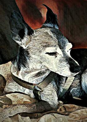 dog pet aged wise italiangreyhound dignity calm