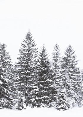 forest wood winter wild wilderness adventure outdoor scandi danish hygge minimal modern photo tree pinecone