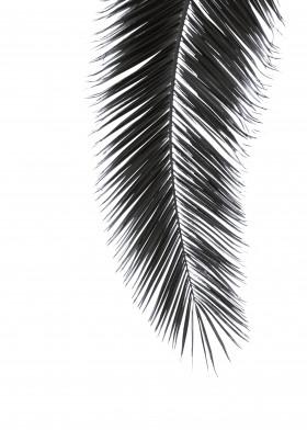 palm leave palmleaves black beach scandi hygge modern minimal photo cool abstract