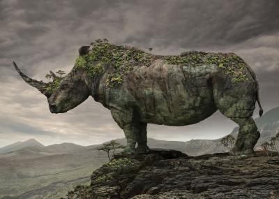 Igor Morski Animals landscape   Displate Prints on Steel