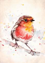 bird robin cute watercolor adventure wildlife animal energetic flying red christmas