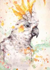 bird cockatoo birds clown white yellow australian tree flight flying proud cheeky
