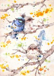 bird blue fairy wren australian birds flowers cute tree family feathers wattle yellow fluffy