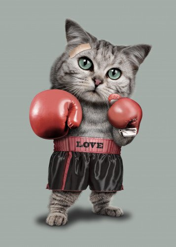 BOXING CAT by Adam Law...M Images Fine Art Photography