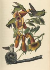 vintage book illustration flowers