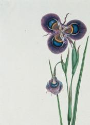 vintage illustration book flower flowers