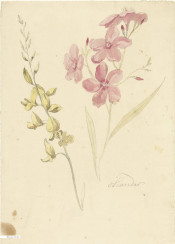 vintage flower book illustration flowers