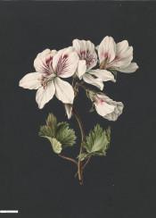 vintage illustration flowers flower book
