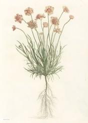 illustration book vintage flower flowers