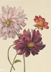 vintage flower illustration book flowers
