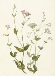 vintage flower flowers book illustration