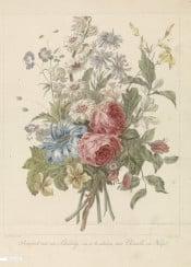 vintage illustration flowers flower