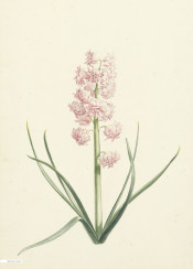 vintage illustration flower flowers