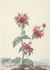 vintage book illustration flower flowers