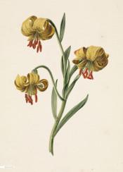 vintage illustration flower book flowers