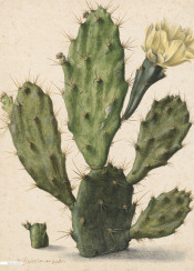 vintage illustration flower cactus book