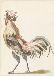 vintage illustration birds hen