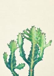 cactus desert tropical plants spines green botanical photography minimal nature