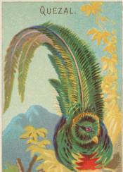 tropical,bird,vintageillustration,illustration,quezal