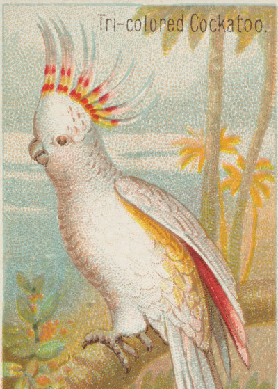 Fine Art   Tropical Birds Illustrations   Displate Prints on Steel
