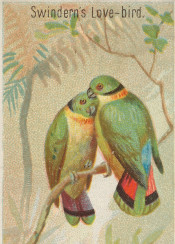 tropical,bird,vintage,illustration,parrot,colorful