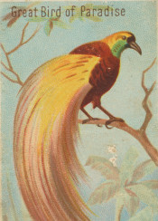 tropical,bird,exotic,vintage,illustration