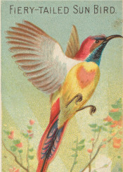 bird,tropical,exotic,vintage,illustration