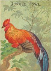 tropical,jungle,exotic,bird,illustration,vintage