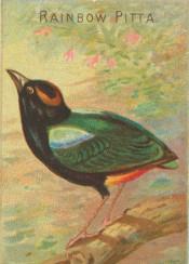 bird,illustration,tropical,exotic,vintage