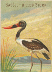 bird,tropical,illustration,exotic,vintage