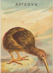 bird,illustration,vintage,exotic,tropical