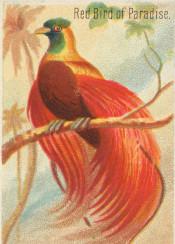 tropical,bird,exotic,jungle,vintage,illustration