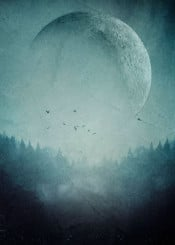 moon monochrome forest mystical surreal birds outdoors wilderness adventure space magical trees nature landscape