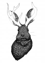 jackalope bunny hare rabbit folklore fantasy whimsical magical fairytale animal wildlife antlers nature