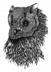 owl animal bird feathers wildlife nature majestic pen ink