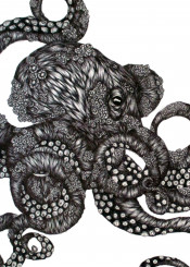octopus marine ocean sea animal wildlife nature barnacle pen