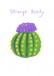 cactus plant succulent