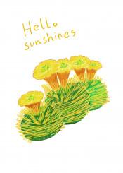 cactus plant sunshine