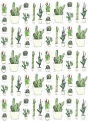 illustration color nature cactus