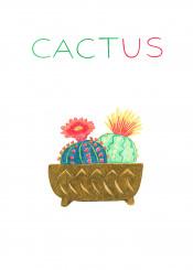 cactus plant succulents
