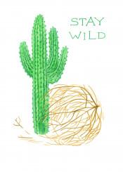 cacti cactus wild