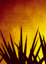 yucca plant decoration silhouettes sunset orange yellow